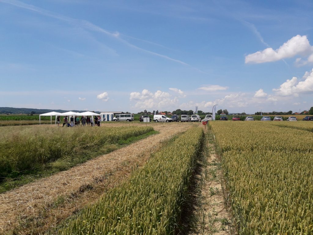 Bayer Agro Arena u Koprivničkim Bregima pokazala snagu svojih fungicida i herbicida
