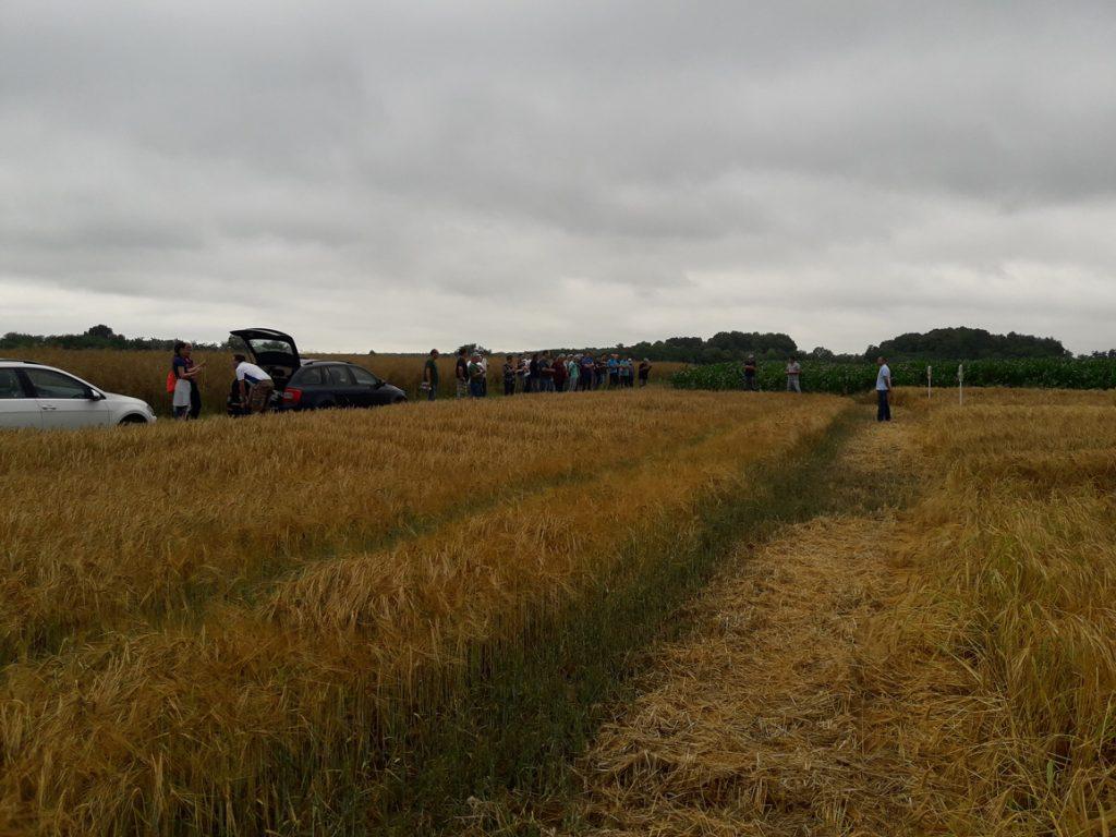 Održana radionica zaštitarske tvrtke Syngenta na Bregovskim poljima